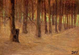 Forest with Sunlit Clearing in the Background