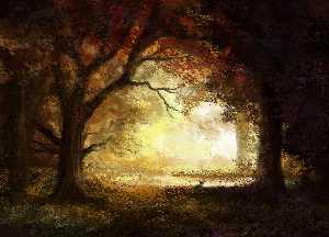 森林 日の出
