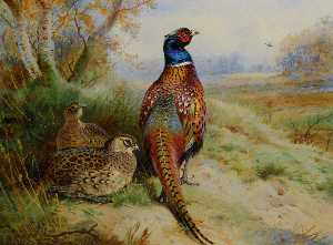 Cock And Hen Pheasant At The Edge Of A Wood