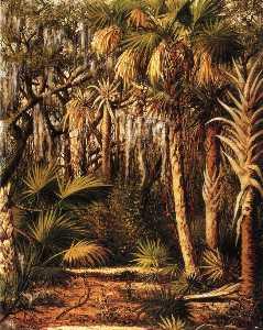 Palm Hammock with Epiphytes