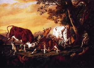 Wolves Attacking Cattle