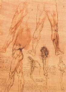 Studies of legs of man and the leg of a horse