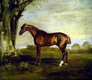 A Chestnut Racehorse