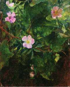 Wild Roses and Grape Vine, Study from Nature