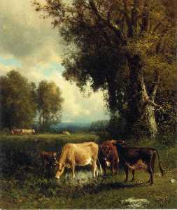 vaches dans le prairie