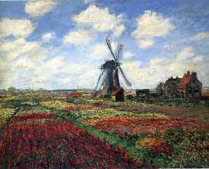 Field of Tulips in Holland