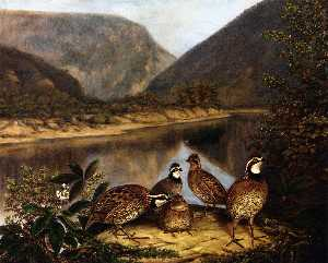 Five Bobwhites at the Delaware Water Gap