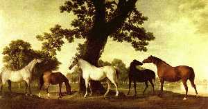Five Brood Mares