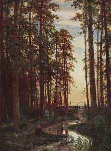 Evening in a pine forest