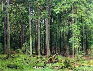 Forest in Mordvinovo
