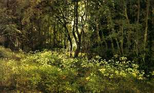 Flowers on the forest edge