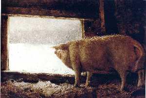 Winter Pig
