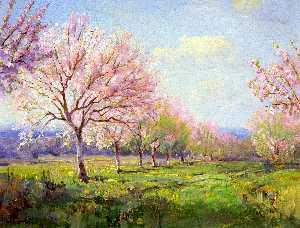 Peach Orchard on Mavericks Farm
