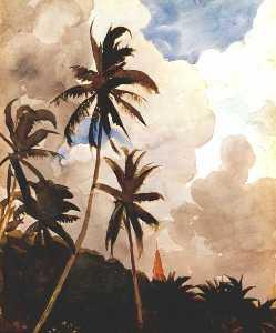 Palm trees (Bahamas)