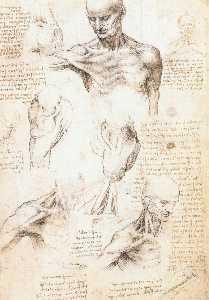 Anatomical studies of a male shoulder