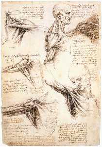 Anatomical studies of the shoulder