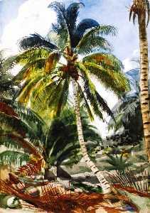 Palm Trees, Bahamas