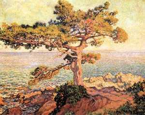 Pine by the Mediterranean Sea