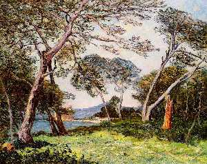 The Pines of the Ile St. Morah