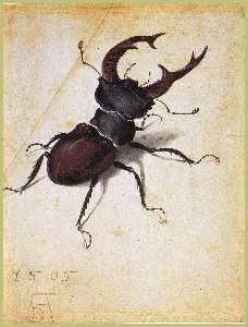 Cervus Lucanus