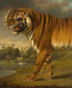 une tigre de