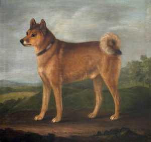 'fox', A Favourite Dog Of Sir John William De La Pole