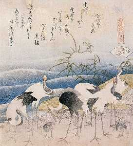 Cranes On The Seashore
