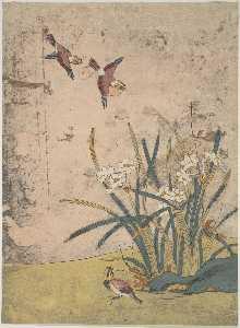 鸟类和 水仙