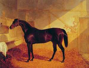 Mr Johnstones Charles XII in a Stable