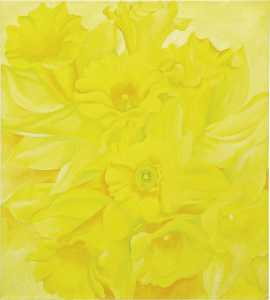 Yellow jonquils iv
