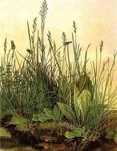 large clumps of grass, Albertina Vienna
