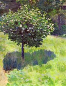A Tree. Study