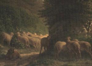 生垣に沿った羊の放牧