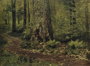 Footpath in a Forest. Ferns.