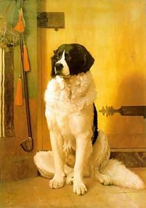 の研究 a 犬