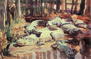 Muddy Aligators