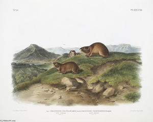 Figue. 1. Georychus helvolus, Tawny Lemming. Grandeur nature; Figue. 2. Georychus trimucronatus, Lemming de Retour