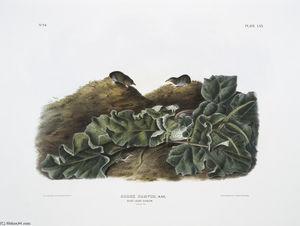 orex parvus, Say's Least Shrew. Natural size