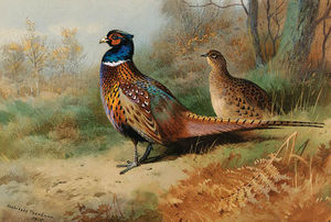 A Cock And Hen Pheasant In A Clearing