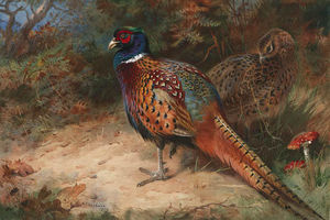 A Cock And Hen Pheasant