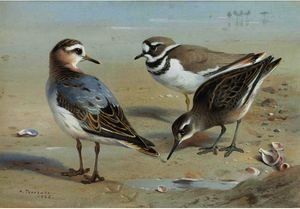 A Knot, A Sandpiper And A Little Ringed Plover