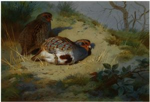 A Pair Of Partridges On A Sandy Bank