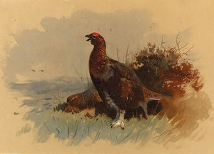 A Pair Of Red Grouse Among Heather