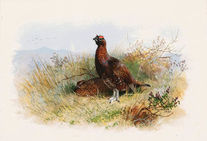 A Pair Of Red Grouse