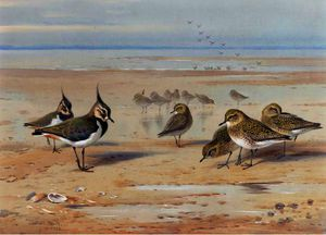 Lapwing And Golden Plover