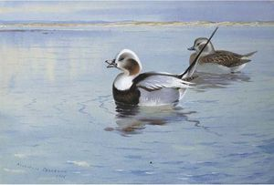 Longtailed Ducks