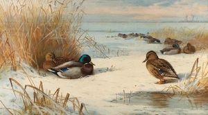 Mallard In A Winter Landscape