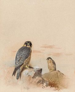 Peregrine Falcons In A Rocky Landscape