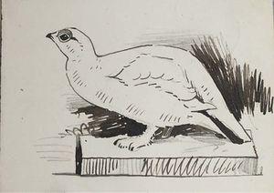 Sketche Of Bird