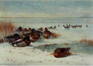 The Frozen Fen - Mallard And Pintail